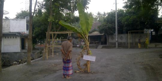 Warga Bagik Payung, Kecamatan Suralaga melakukan aksi pemblokiran jalan kabupaten yang kondisinya rusak parah dengan ditanami pohon pisang di tengah jalan. (Foto: Syamsurrijal/Lomboktoday.co.id)